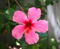 Emily-Binder-Photography-Nature-Flower-1