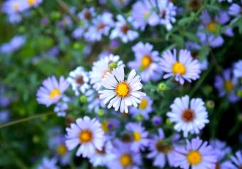 Emily-Binder-Photography-Nature-Flower-11