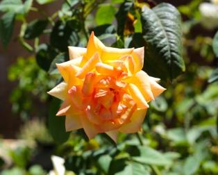 Emily-Binder-Photography-Nature-Flower-2