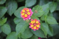 Emily-Binder-Photography-Nature-Flower-25