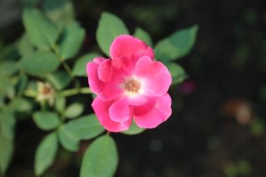 Emily-Binder-Photography-Nature-Flower-27