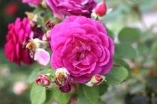 Emily-Binder-Photography-Nature-Flower-28