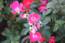 Emily-Binder-Photography-Nature-Flower-29