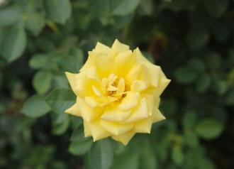 Emily-Binder-Photography-Nature-Flower-30