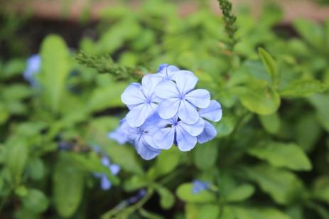 Emily-Binder-Photography-Nature-Flower-31
