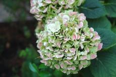 Emily-Binder-Photography-Nature-Flower-33