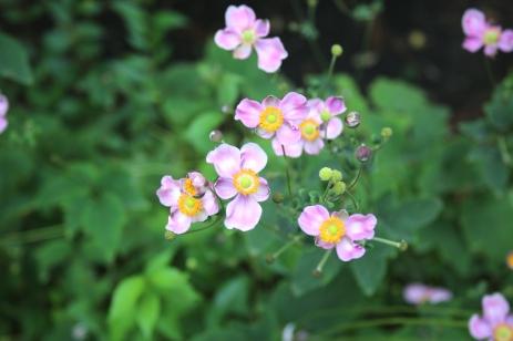 Emily-Binder-Photography-Nature-Flower-34