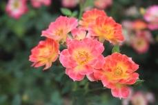 Emily-Binder-Photography-Nature-Flower-35