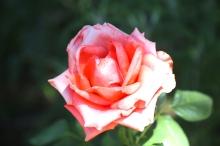Emily-Binder-Photography-Nature-Flower-4