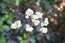 Emily-Binder-Photography-Nature-Flower-6