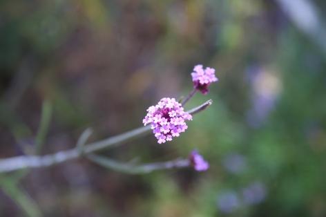 Emily-Binder-Photography-Nature-Flower-7