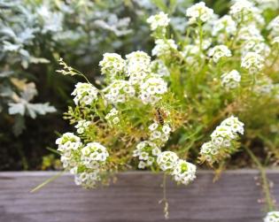 Emily-Pillon-Photography-Nature-Flower-42